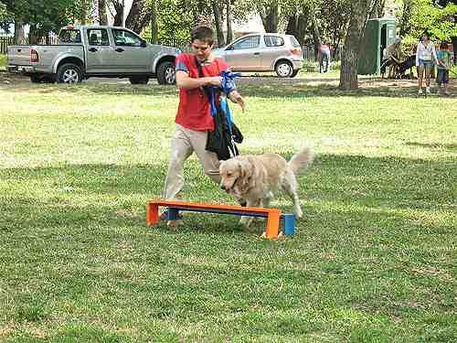 Reducir los gastos de nuestro perro