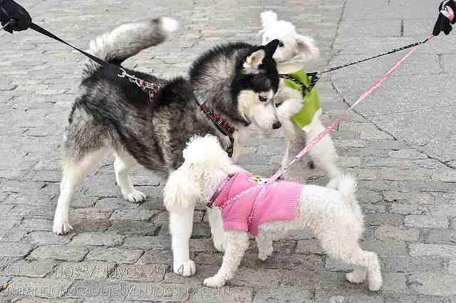 Diferentes razas de perro